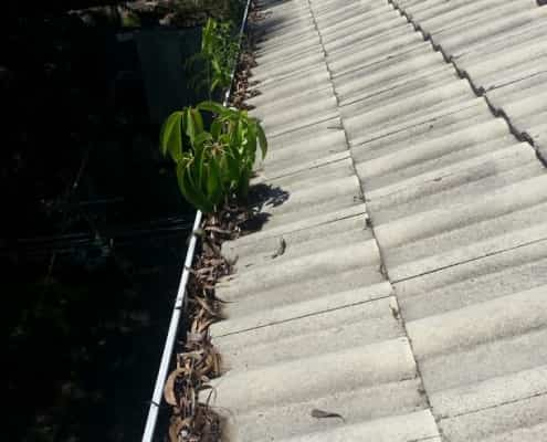 ICU Gutter Cleaning Fig Tree Pocket